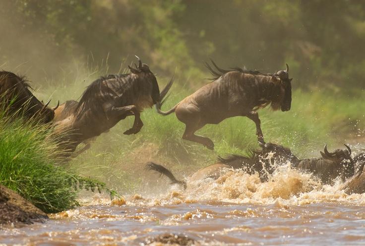 Migration, Kenya.