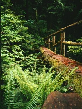 UBC Research Forest in Maple Ridge, BC