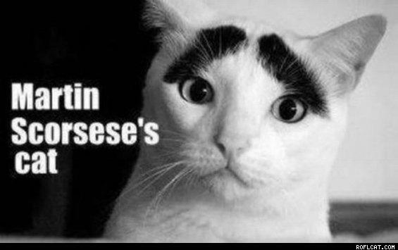 Martin Scorsese's cat