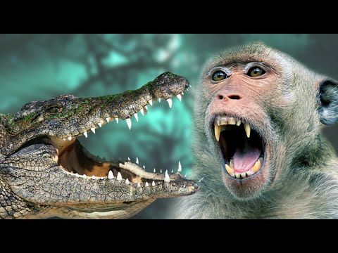 Monkey vs Crocodile Real Fight - Monkey is saving His child from Crocodile