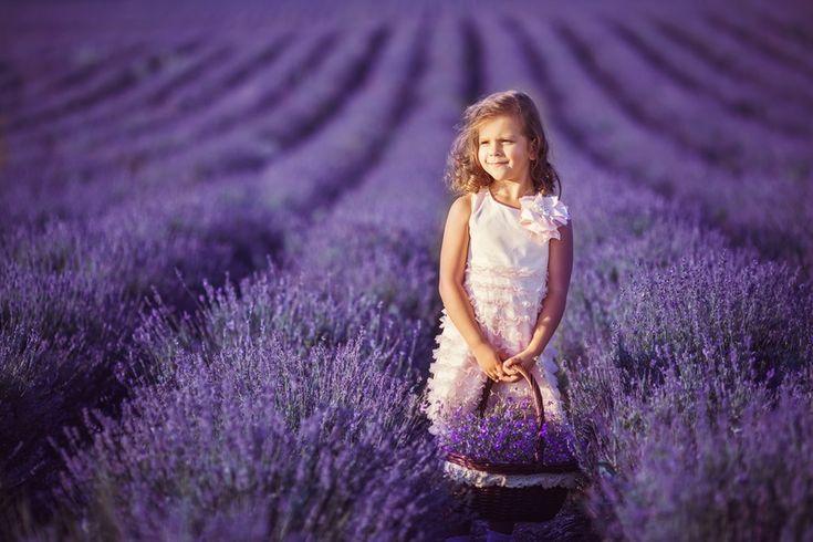 Лавандовые поля провинции Прованс, Франция. Фото
