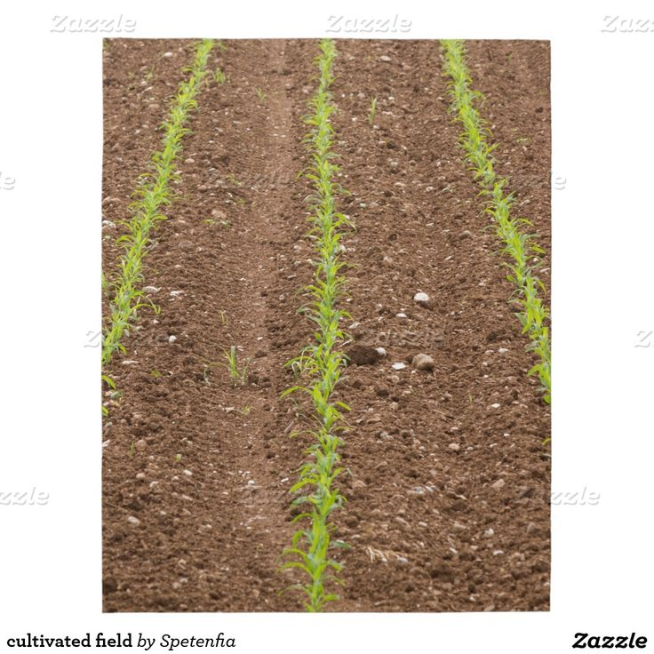 cultivated field puzzle