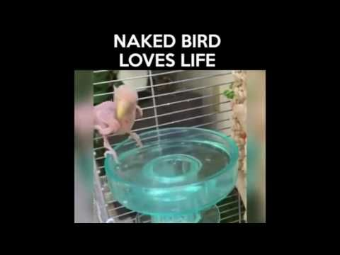 cheaptravelbooker blogg: very funny naked bird who love life,very funny vid...