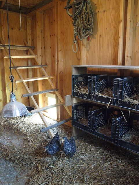 Now this is cool! Chicken Coop: Milk crate nesting boxes: http://ohiothoughtsblog.blogspot.com/2012/05/chicken-coop.html #Homesteading #ChickenCoops #RaisingChickens #ModernSteading #ModernPioneering