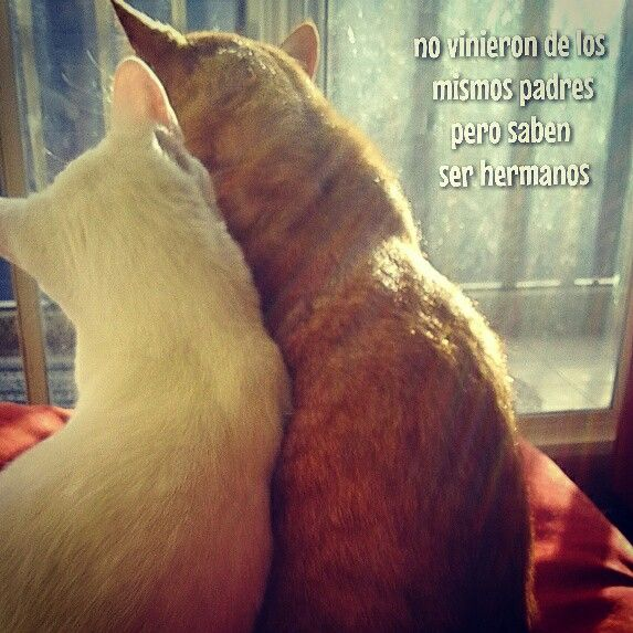 Sherlock & Dave Romero Infinita ternura #cats #lovers #cute