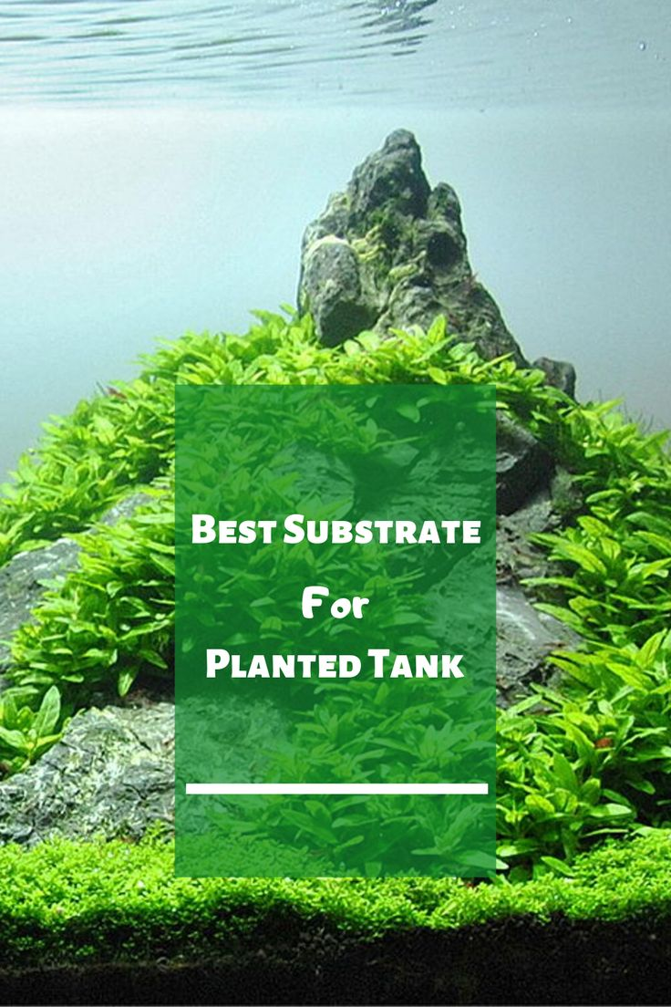 Best Substrate For Planted Tank in 2020 (Reviews + Guide ...