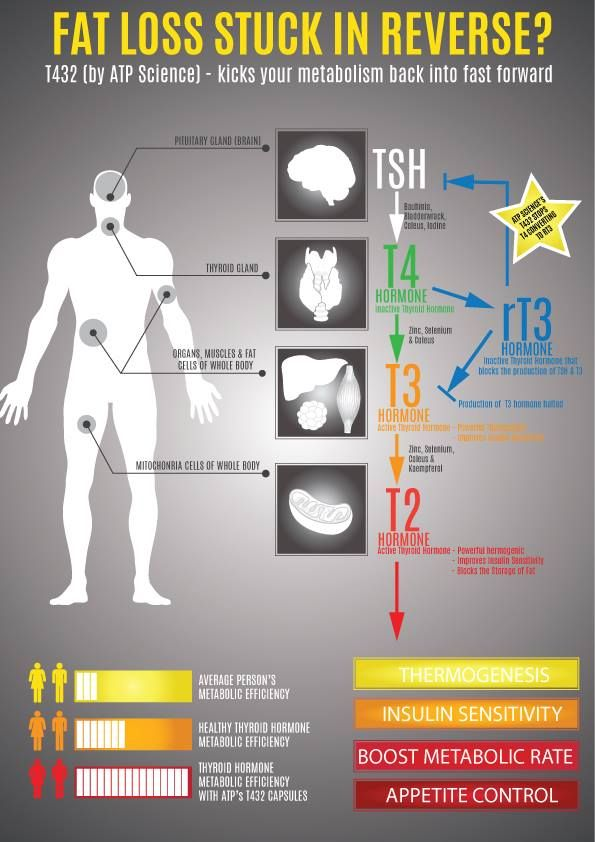 T432 - Is your Fat Loss Stuck in Reverse??