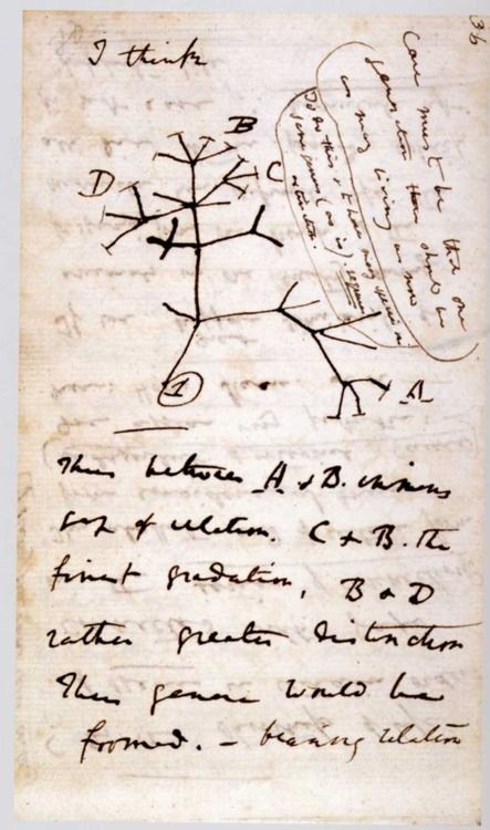 "Darwin's first sketch of the tree of life from one origin. Note the cross-bars for extinction — and that change is not conceived with some direction-as-progress. And notice Darwin's simple words introducing the sketch, ""I think…"""
