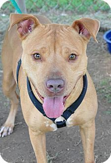 Colonial heights animal shelter