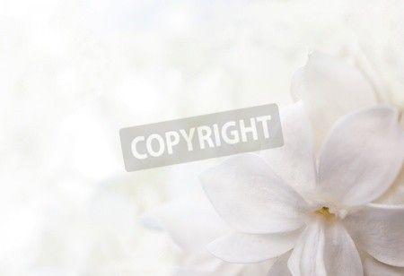 ライラックの花から白い背景