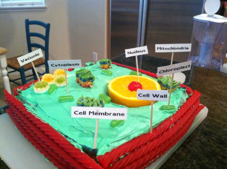 Plant Cell Diagram Labeled Related Keywords Suggestions Plant Cell