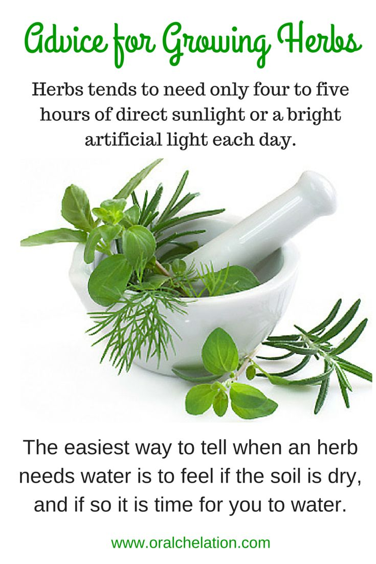 Advice for Growing Herbs brought to by.... www.oralchelation.com