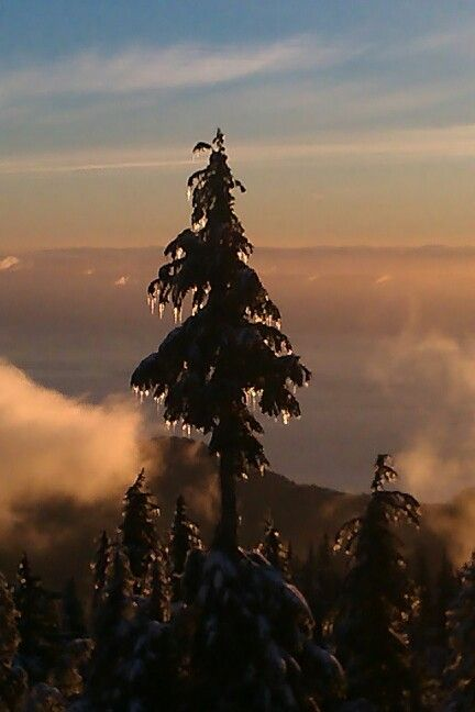 Ice tree cypress mountain