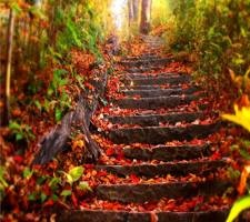 Scenery, Wooded steps