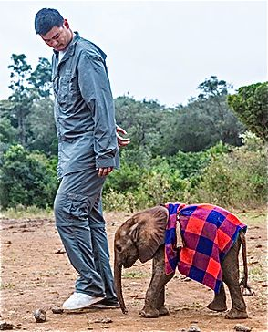 Yao Ming and an orphaned elephant at the David Sheldrick Wildlife Trust