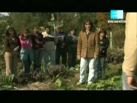 Curso de huerta Orgánica - 5 (Asociacion y rotacion de los cultivos) 2 - YouTube