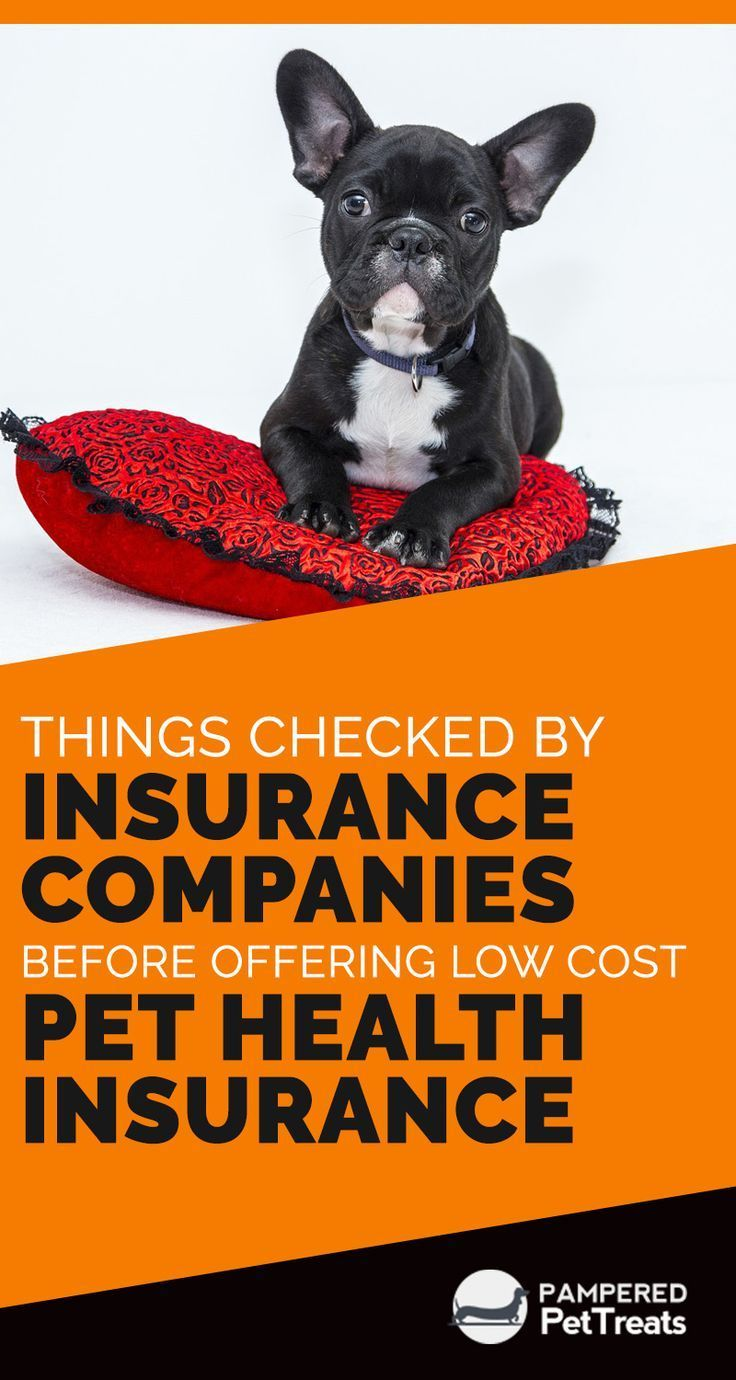 As You Plan To Go For Insuring Your Pet Against Possible Health