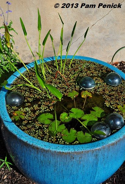Small container pond -- Gardens on Tour 2013: Kathy Cove Garden | Digging