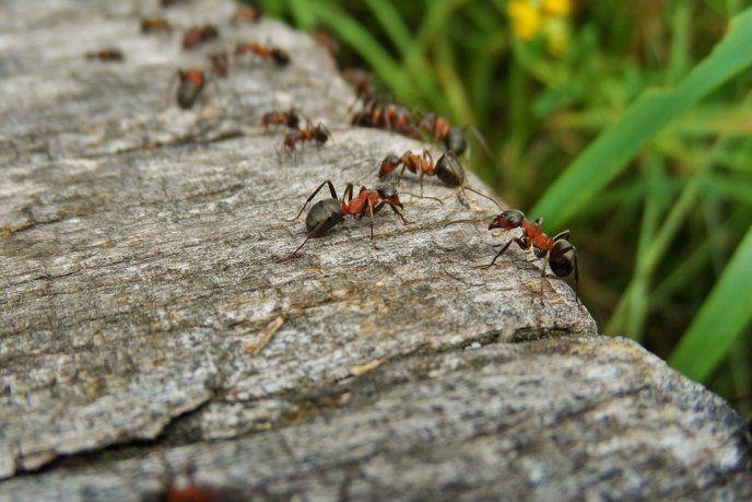 Como Acabar Con Las Hormigas En Mi Cocina Pin En Salud