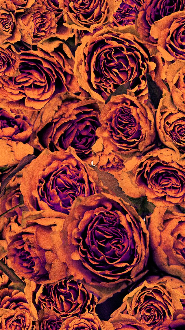 Orange purple autumn floral roses  iphone phone wallpaper background lock screen