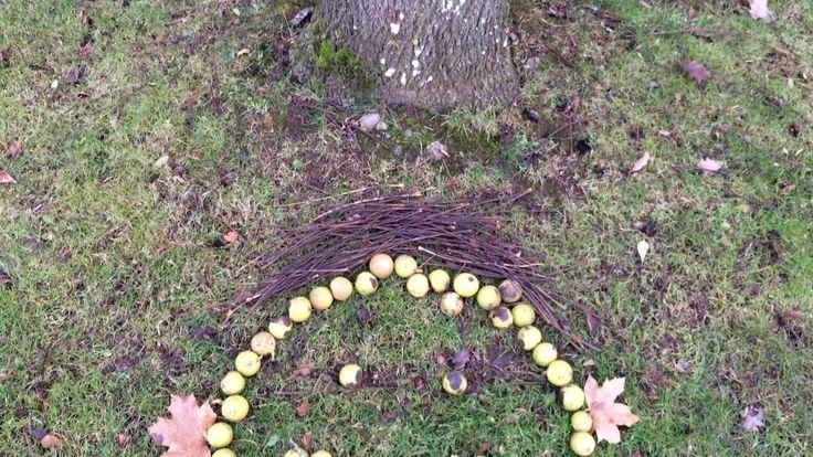Black walnut (Juglans nigra) - Happy face /\/\ - November 2017
