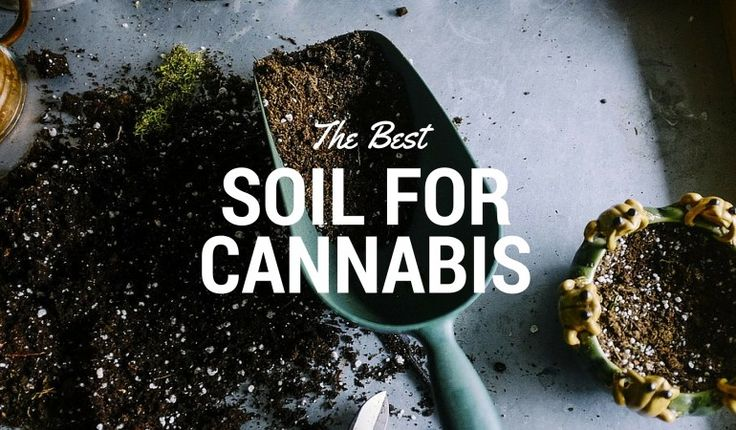 Choosing the best soil for cannabis plants is one of the most important decisions. This guide shows you our top two choices for cannabis soil. Read the entire article: https://indoorgrowguru.com/best-soil-for-cannabis/