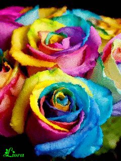 Радужные розы - анимация на телефон №1372205
