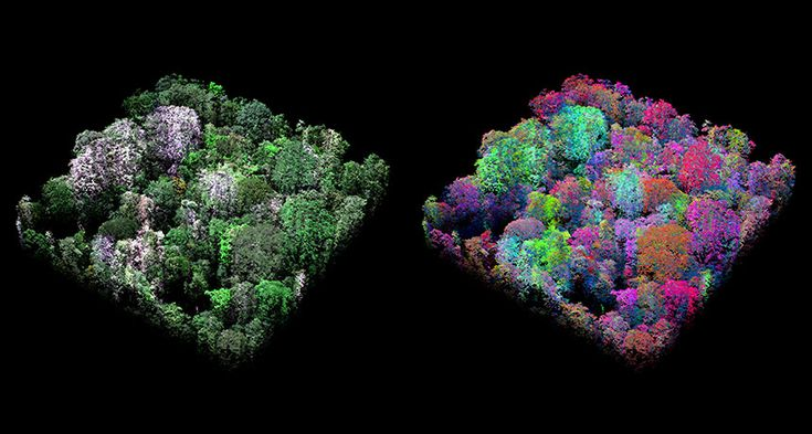 Chemical signatures of the Peruvian tree canopy reveal previously unrecognized biodiversity.  Aircraft analysis of tree chemicals reveals new biodiversity in the Peruvian rainforest.
