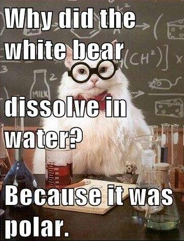 Afbeelding: chemistry cat joke, polaire stoffen #sciencehumor