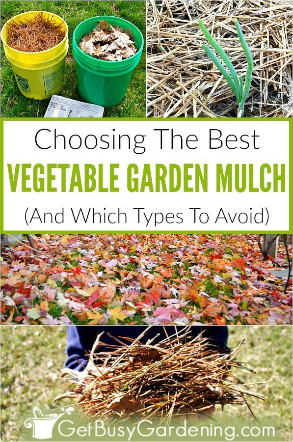 Choosing The Best Mulch For Vegetable Gardens Vegetable