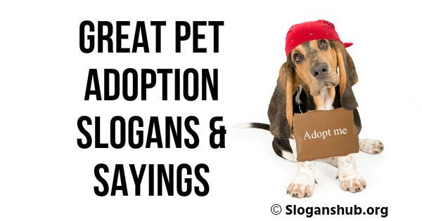 A List Of 37 Best Pet Adoption Slogans Sayings To Encourage