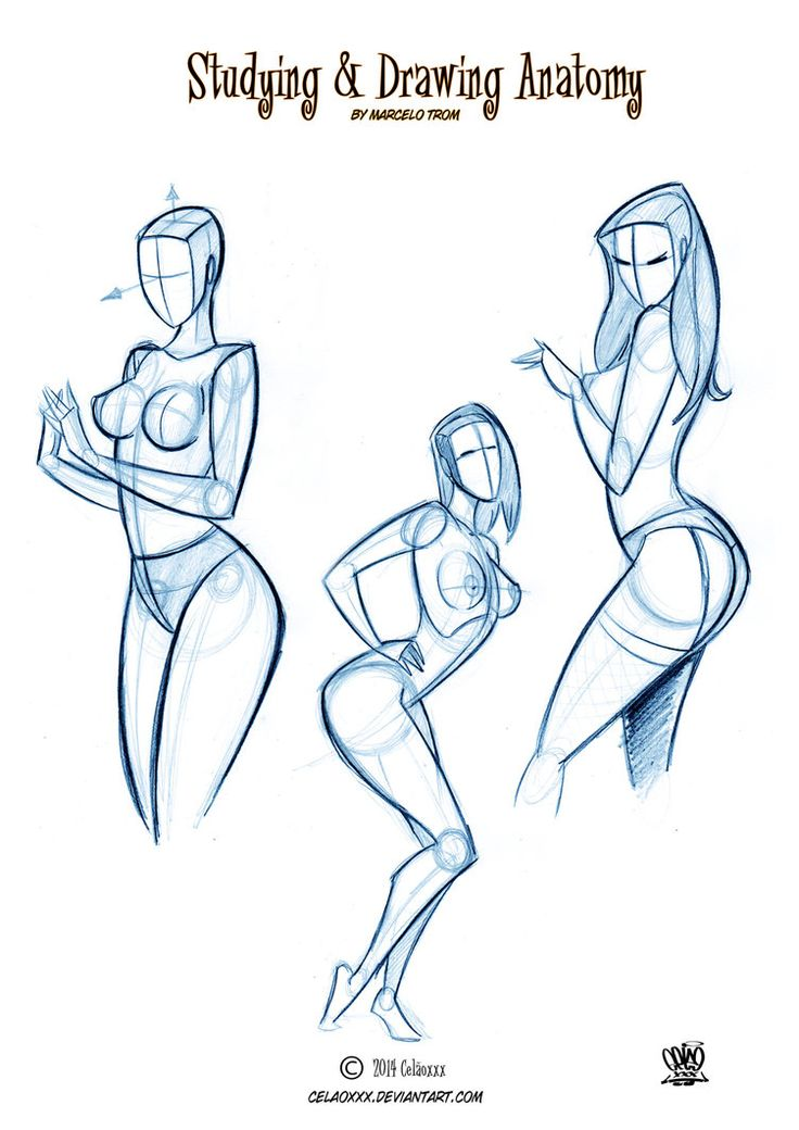 8 Best Cela Images On Pinterest Body Anatomy Artistic Anatomy And