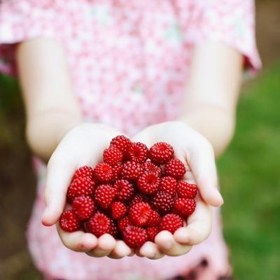 Companion Plants for Raspberries