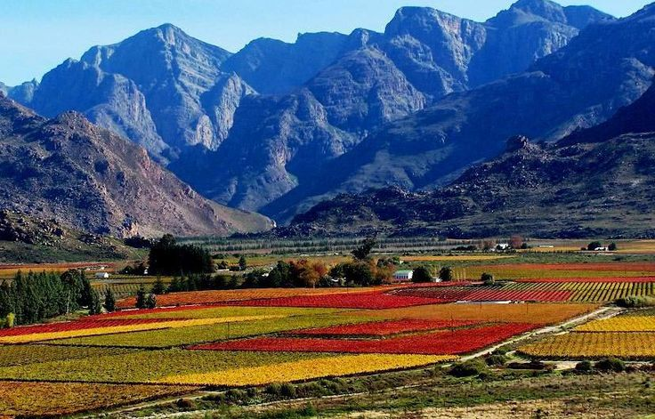 The origins of the Winelands in Cape Town, South Africa. Before a Wine Tasting Tour, discover how it all starts...