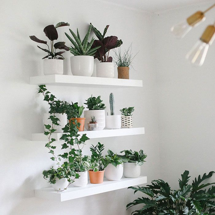 How To Build The Perfect Plant Wall Living Room Plants Room With Plants Wall Planters Indoor
