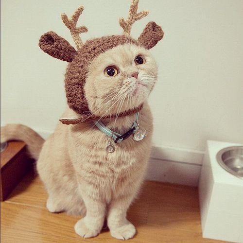 DIY Crochet Reindeer Hat For Kitty