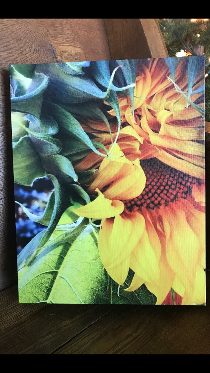 11 Best August Ann Inspired Images On Pinterest Mooi Printing Premium Sweater Top Garden Bunny S Sunflower Farm Photography Farmhouse Decor Large Wall Art Fine Canvas