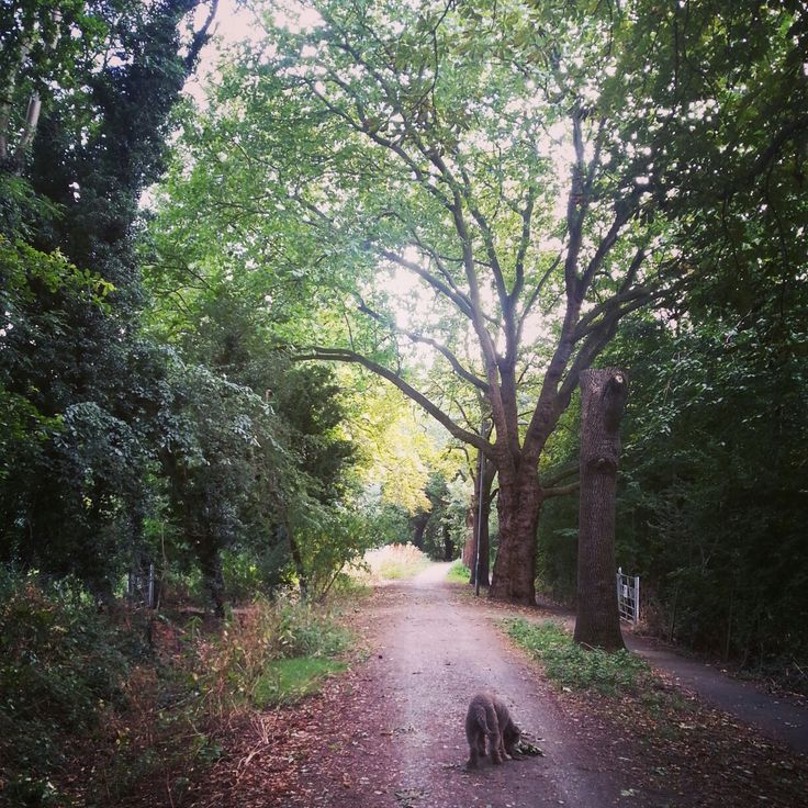Leafy passage in a london park