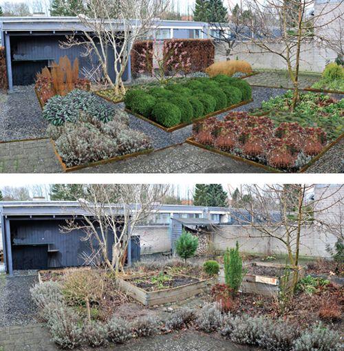 Gårdhave, vintergrøn, gyldne græsser.