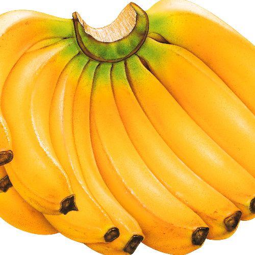 http://pulsedev.info/dev/user_v4/Niyati-tps/home/news/679. Banana