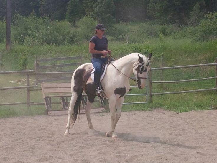horse/riding/english
