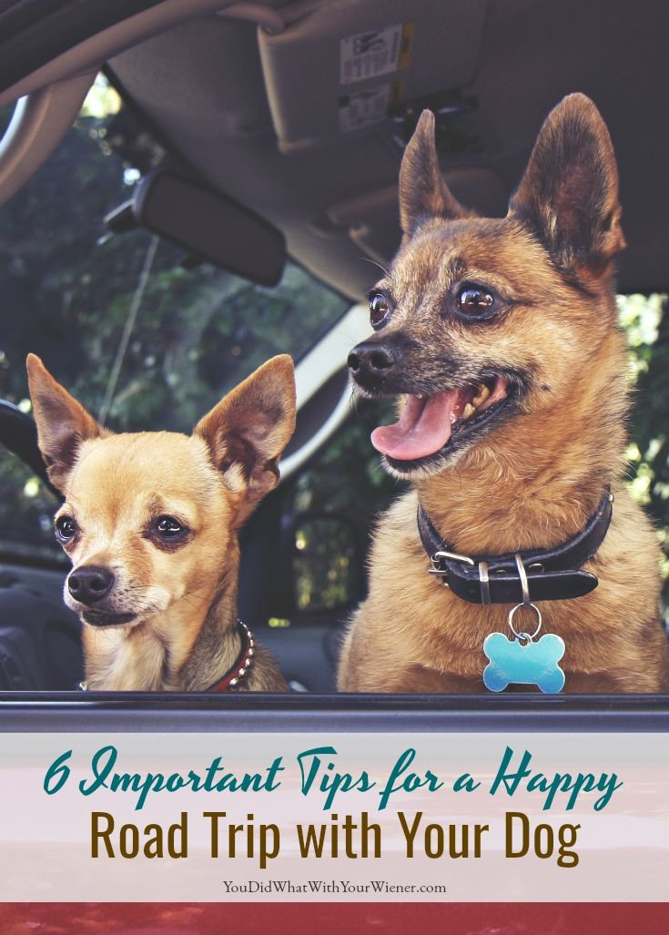 273 best dog friendly travel images on pinterest dog care dog mom 6 important tips for a happy road trip with your dog solutioingenieria