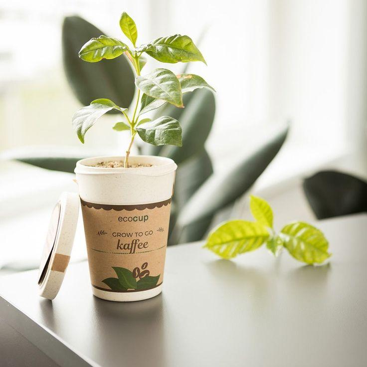 Plante en gobelet