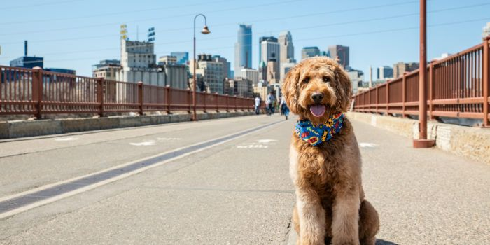 Sidewalk Minneapolis Dog Friends Dogs Dog Contest