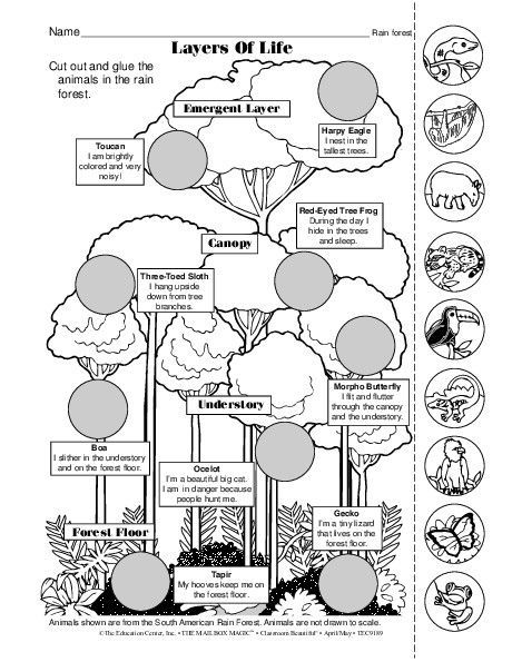 Image Result For Rain Forest Diagram Draw Along