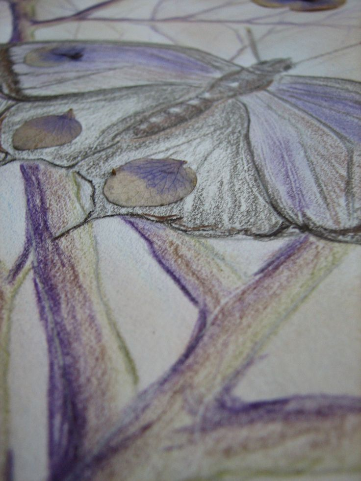 This is 'purple' week over at the Summer of Color challenge. My inspiration was The Purple Hairstreak Butterfly. I haven't drawn anything in a while so I put my stamps, collage sheets, and stickersaway for this one. I used my Derwent pencils–using 'Imperial Purple' for the dark shading on the branches, instead of brown like …