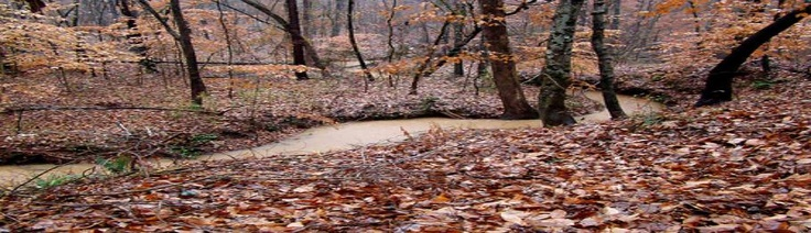 Missouri deer hunts by Creekbottom Whitetail Outfitters