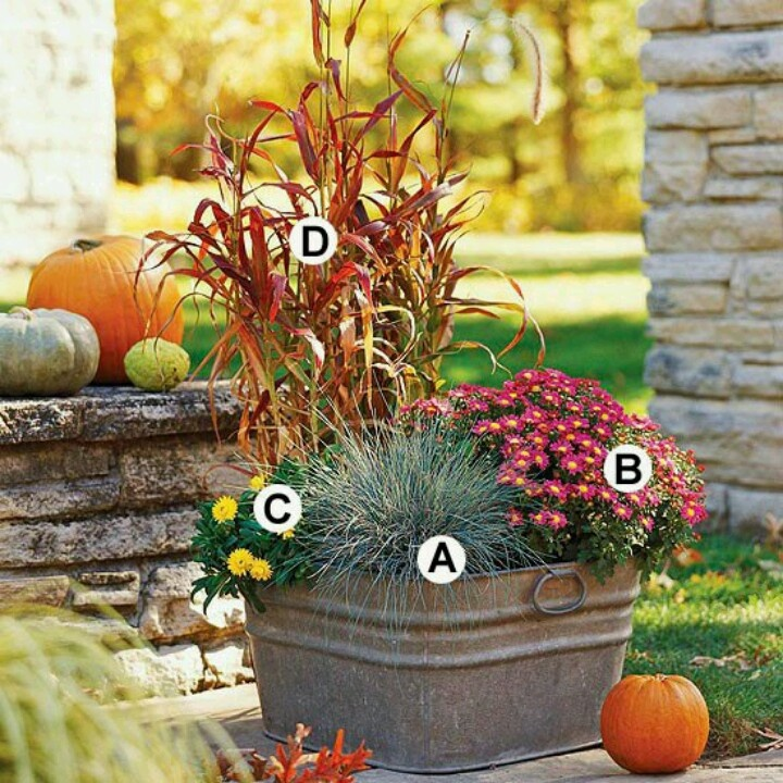 Fall Container Garden Mix: A. Blue Fescue (Festuca Glauca): 1 B.  Chrysanthemum U0027Ceciliau0027: 2 C. Strawflower (Bracteantha U0027Sundaze Golden  Yellowu0027): 1 D. ...