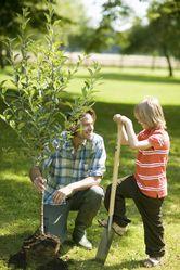 Arbres fruitiers à planter