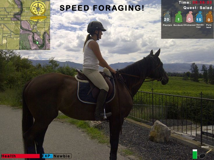 Speed Foraging! Video-game Style!